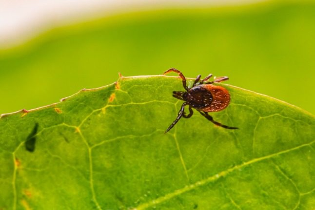 Ticks in Italy: How to avoid them and protect yourself