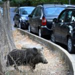 Rome votes in mayoral election dominated by rubbish and wild boars